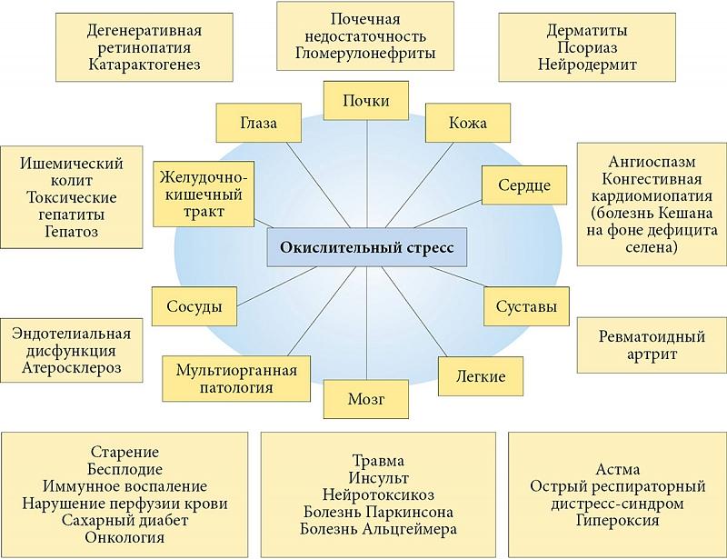 curcuma o serenoa per la prostata
