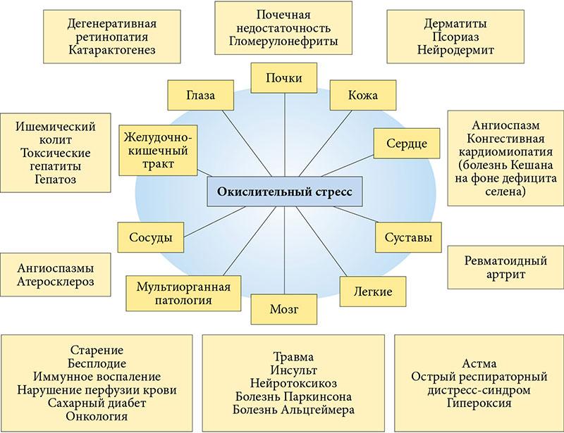 Карнитин сперматогенез