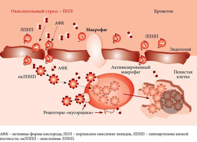 полости рта и кишечника с