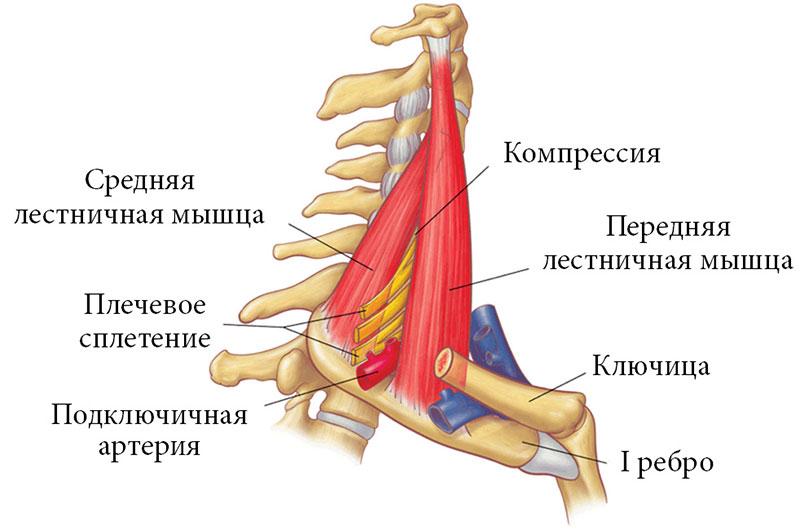 Алгоритм поиска болей в суставах мышца слабая доктор ше ключ сустава лисфранка