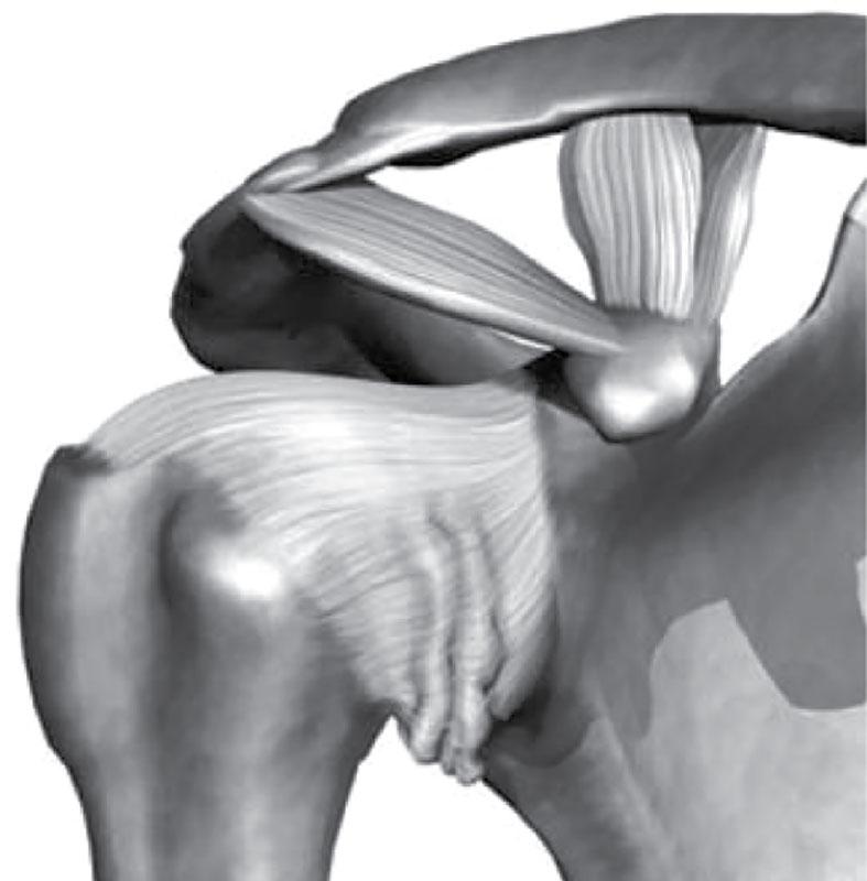 У меня остеопороз плечевого сустава лечение мужчина ортезы на коленный сустав детям