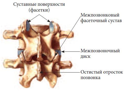 Фасеточный сустав лфк по норбекову при артрозе коленного сустава комплекс упражнений