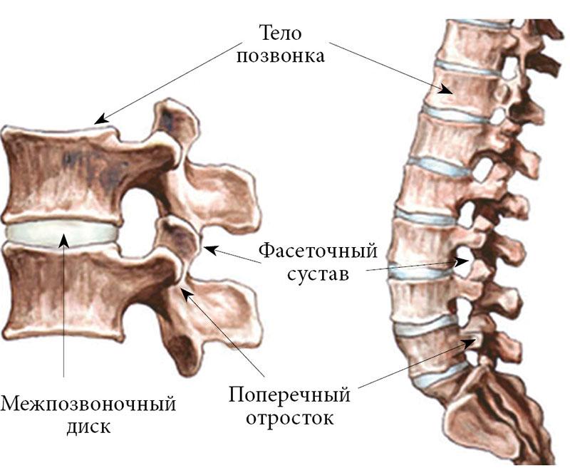 Деструкция фасеточных суставов движений в суставах существуют мышцы