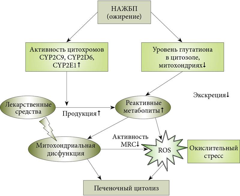 Лечения аллергического ринита народными средствами