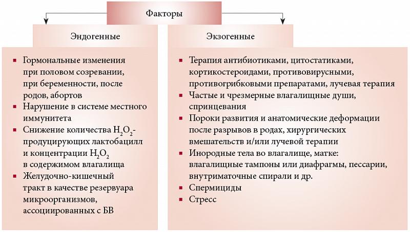 Схема развития бактериального