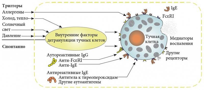 Омализумаб инструкция по применению при крапивнице
