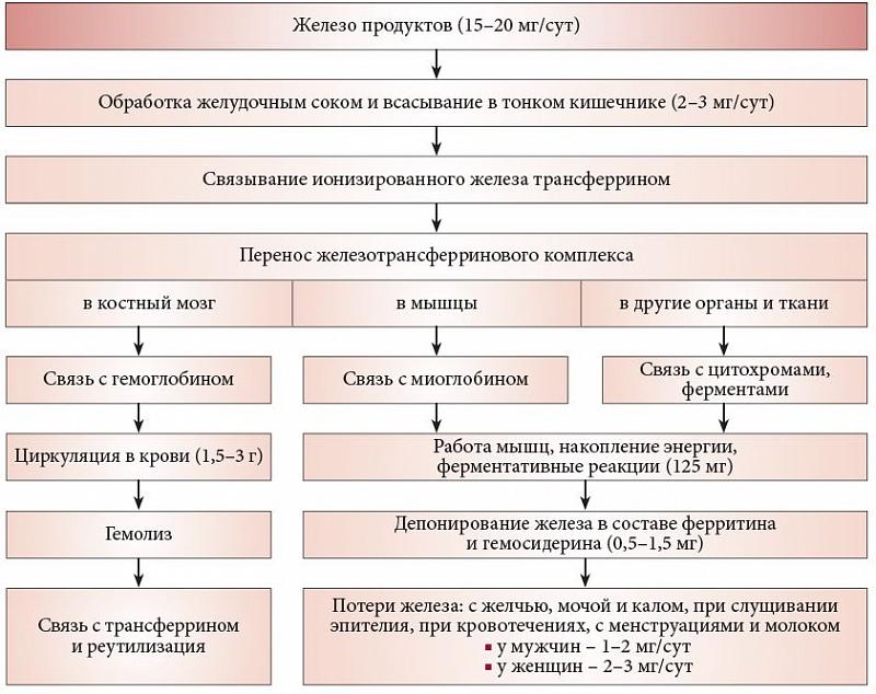 Лечение суставов лавровым листом рецепты